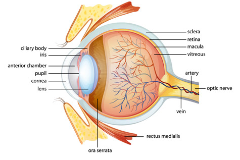 sydney retinal disease specialists